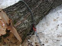 Choker chain on big maple log